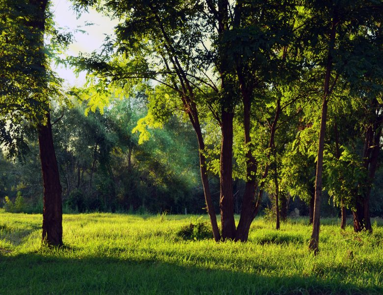 environment-forest-grass-165537